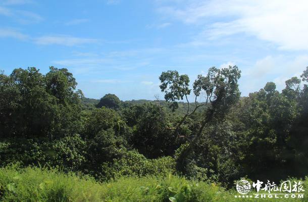 帕劳红树林