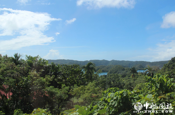 帕劳群岛红树林