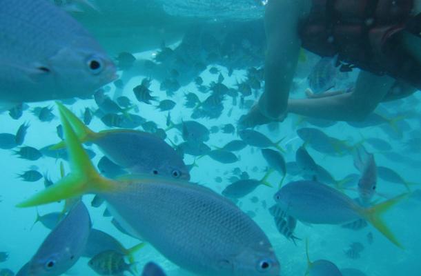 帕劳潜水与与戏水