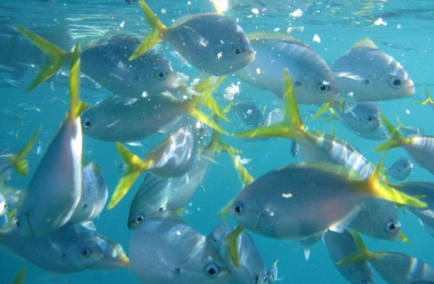 美丽的帕劳群岛鱼群