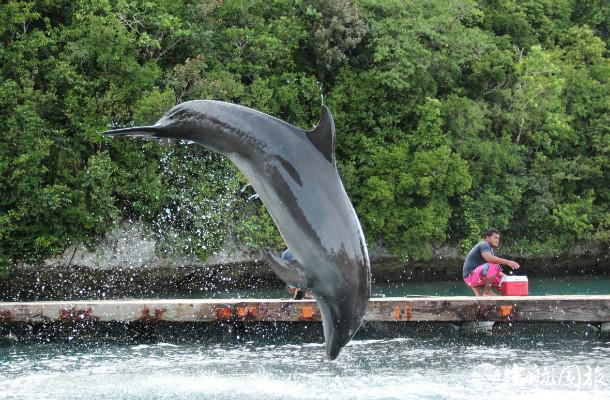 帕劳海豚保护中心