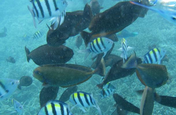 帕劳海岛世界奇观